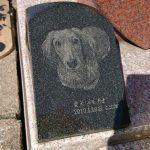 多磨霊園にて現地調査、ペットのお墓、墓所の洗浄など。