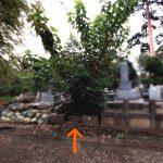 都立多摩霊園にて、樹木の伐採、砕石・転圧による草止め、拝石交換などを行いました。お墓としての機能を取り戻す、必要最低限の工事